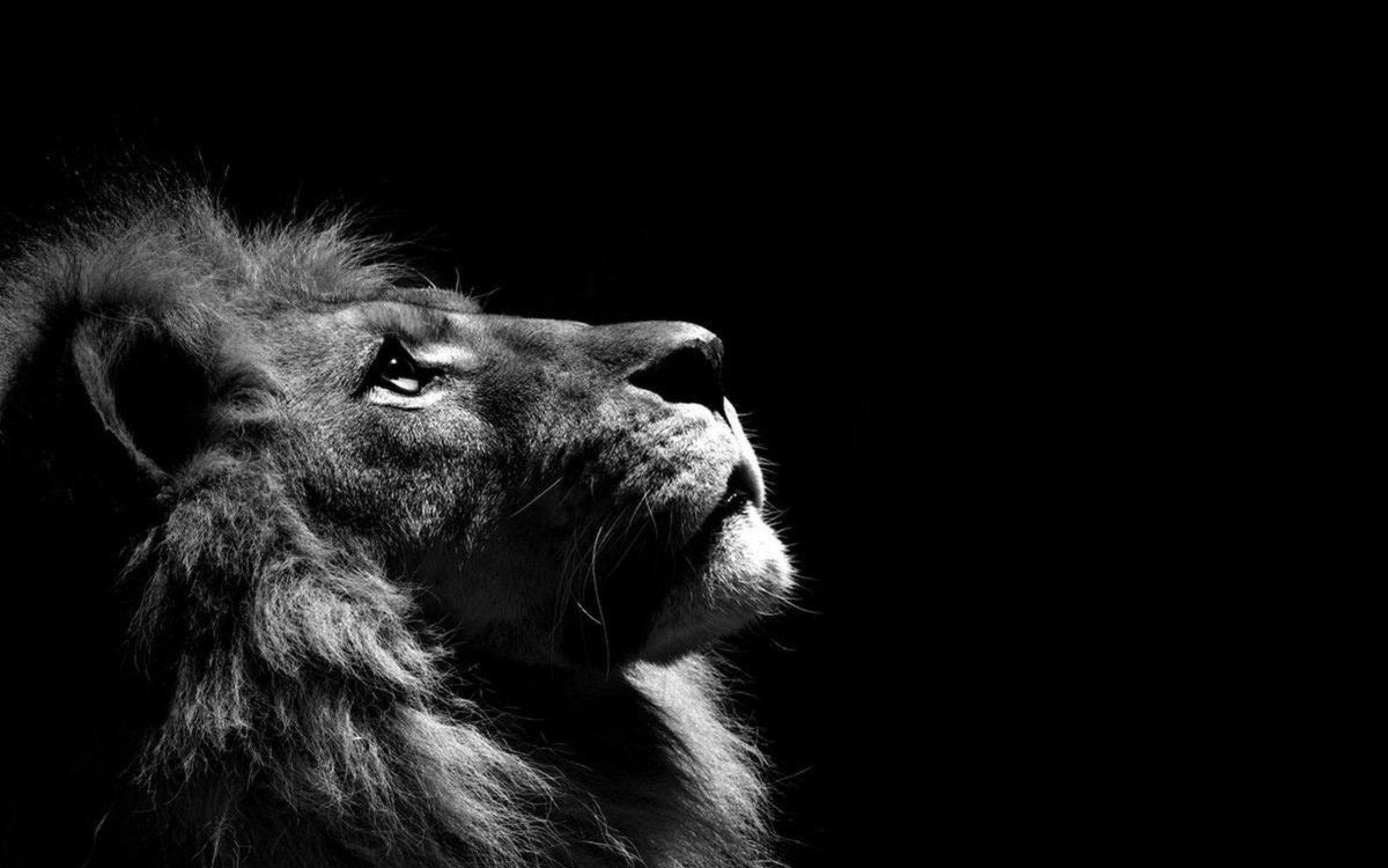 Black and White Lion Wallpapers - Top Free Black and White Lion Backgrounds  - WallpaperAccess