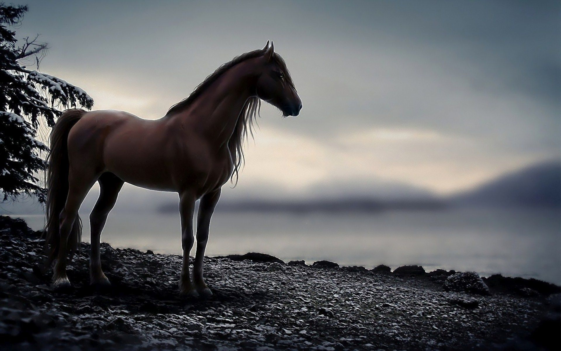 Cool Horse Wallpapers Top Free Cool Horse Backgrounds Wallpaperaccess
