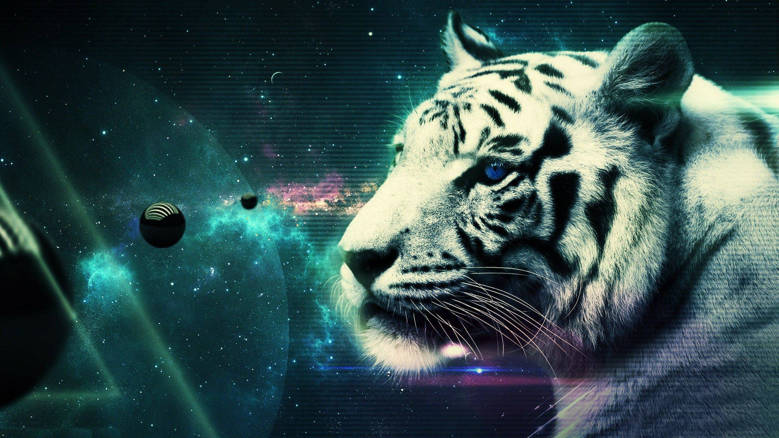 Cool Tiger Wallpapers Top Free Cool Tiger Backgrounds Wallpaperaccess