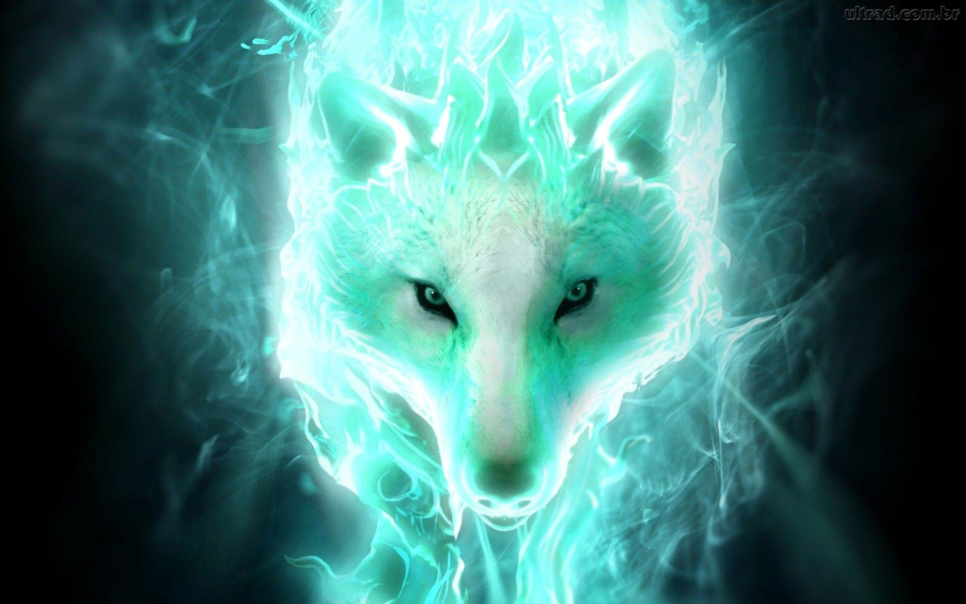 Super Cool Wolf Wallpapers Top Free Super Cool Wolf Backgrounds Wallpaperaccess