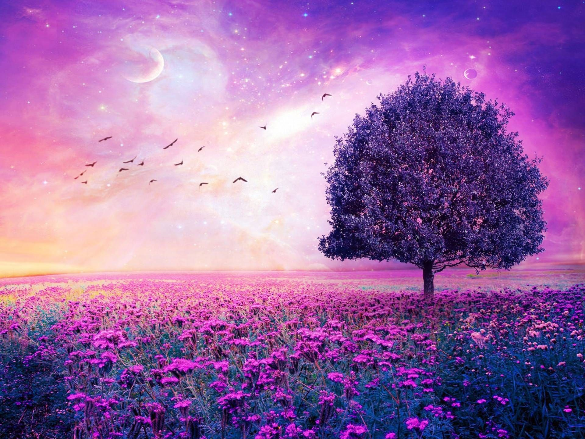 Pink And Purple Nature Wallpapers Top Free Pink And Purple