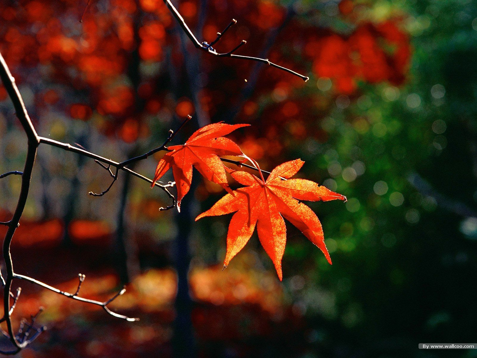 Autumn Leaves Hd Wallpapers Top Free Autumn Leaves Hd