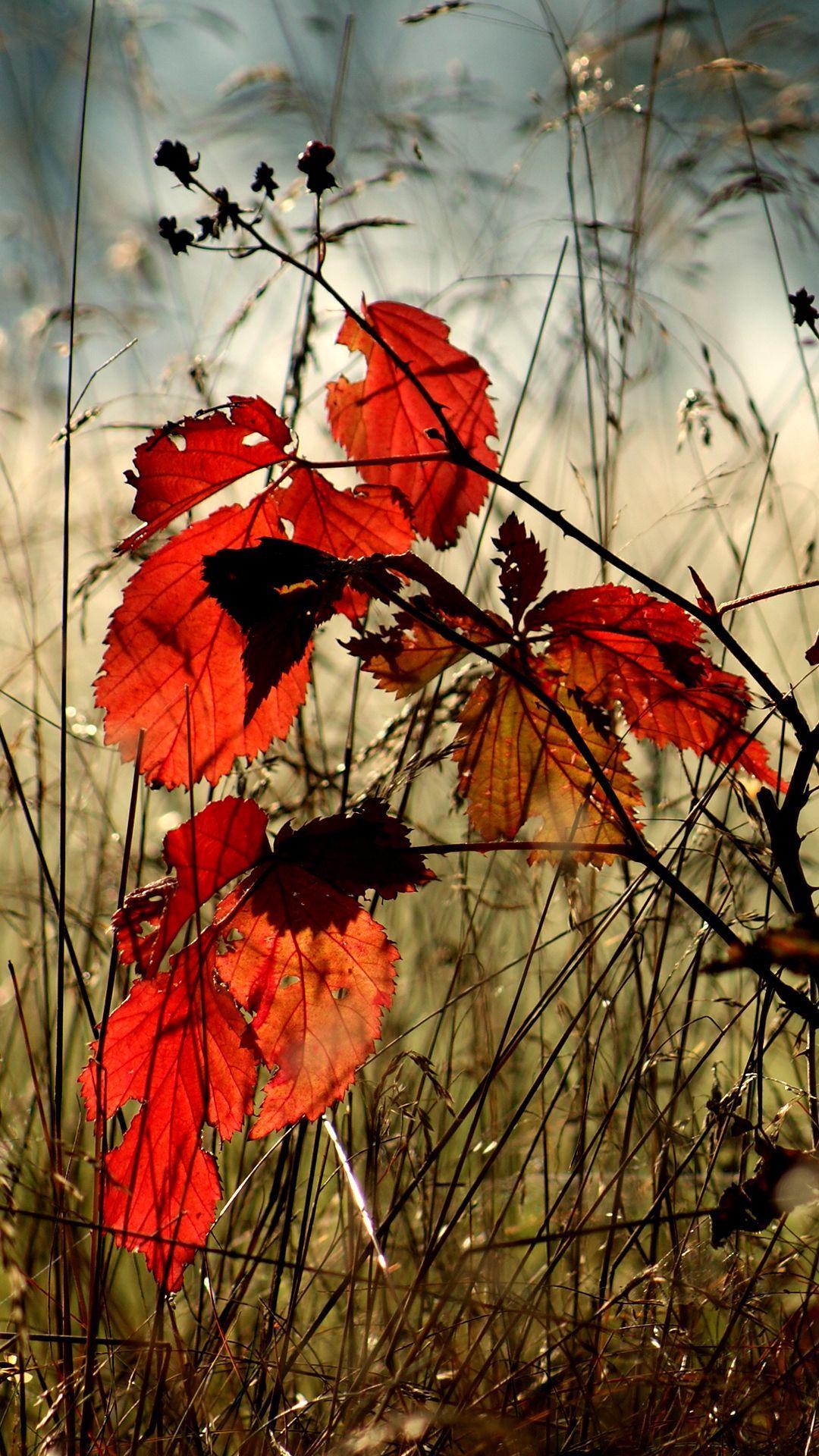 Hình nền điện thoại 1080x1920 Autumn Leaves - Hình nền điện thoại mùa thu HD