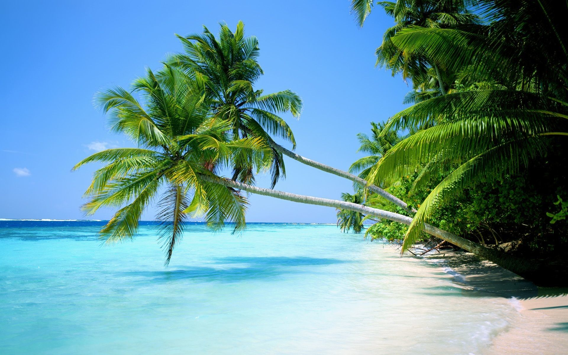 Tropical Island Wallpapers Top Free Tropical Island Backgrounds Wallpaperaccess