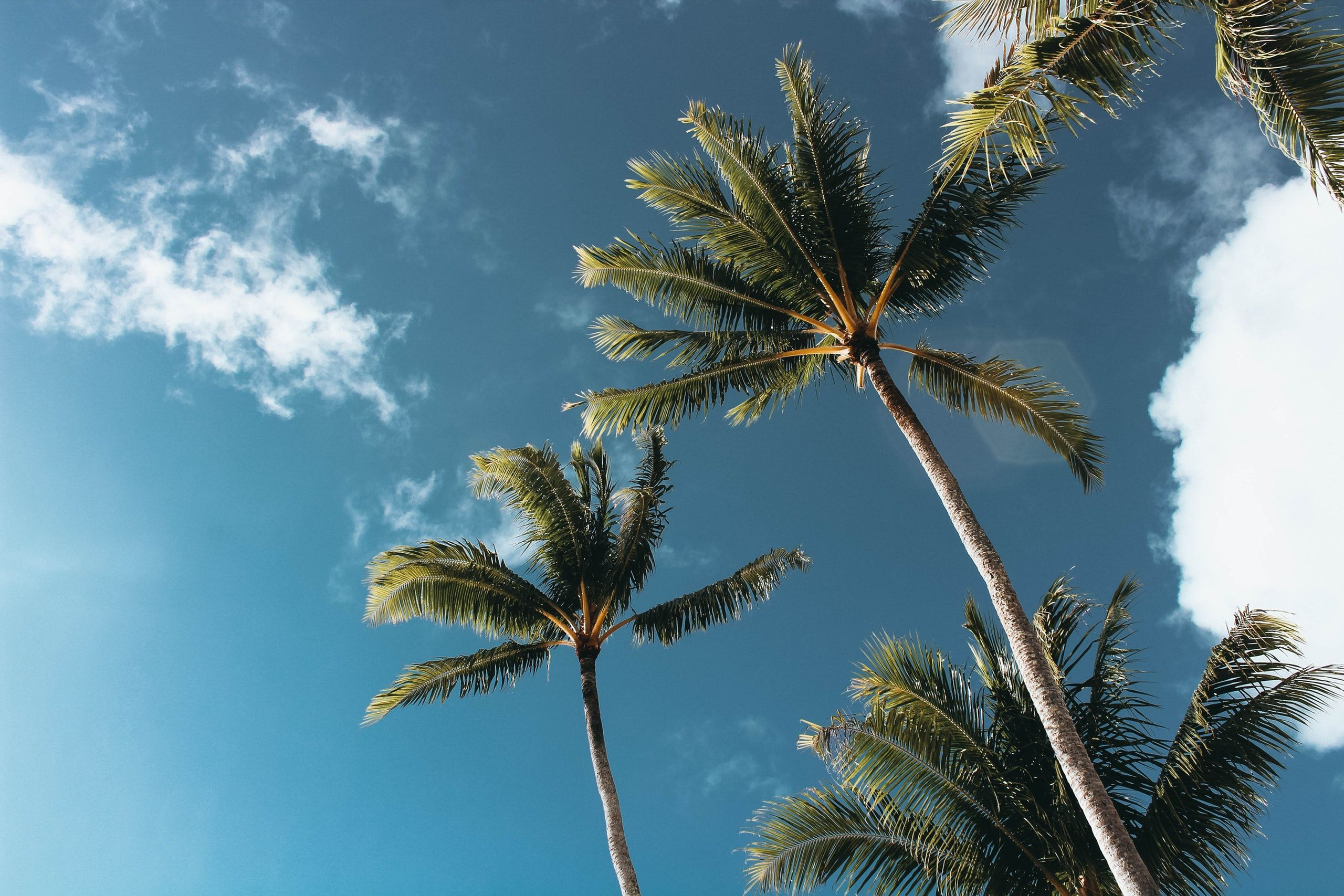 California Palm Trees Wallpapers Top Free California Palm Trees Backgrounds Wallpaperaccess
