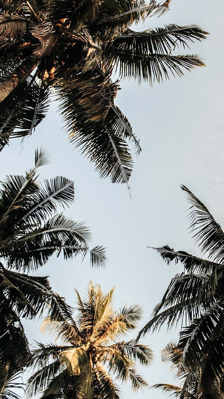 Palm Tree iPhone Wallpapers - Top Free