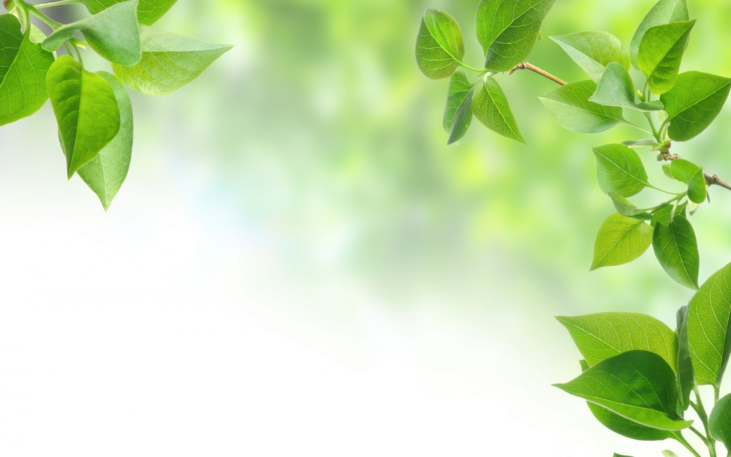 Green Leaves Wallpapers Top Free Green Leaves Backgrounds
