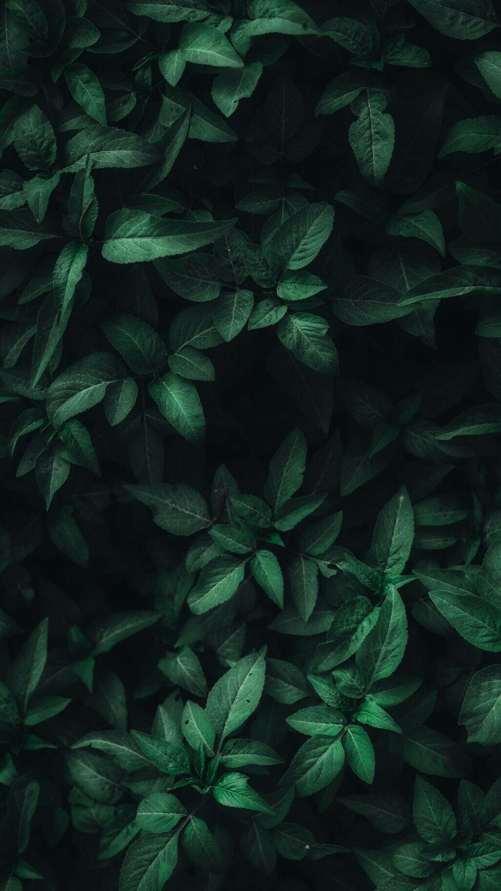 Dark Green Leaves Wallpapers Top Free Dark Green Leaves Backgrounds Wallpaperaccess