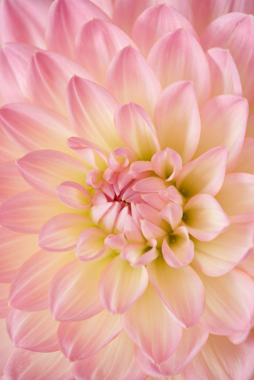 Flowers Wallpapers - Top Free Flowers ...