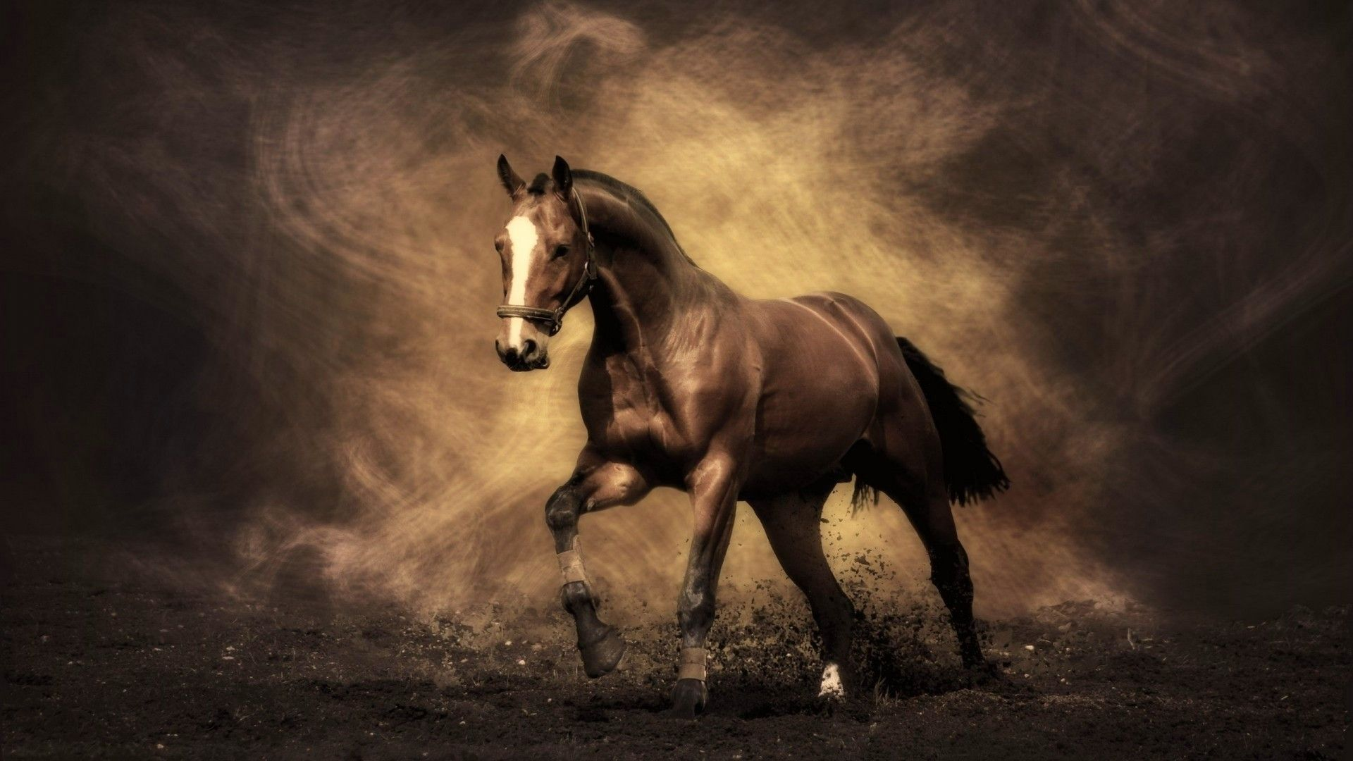 Beautiful Horses Wallpapers Top Free Beautiful Horses Backgrounds Wallpaperaccess