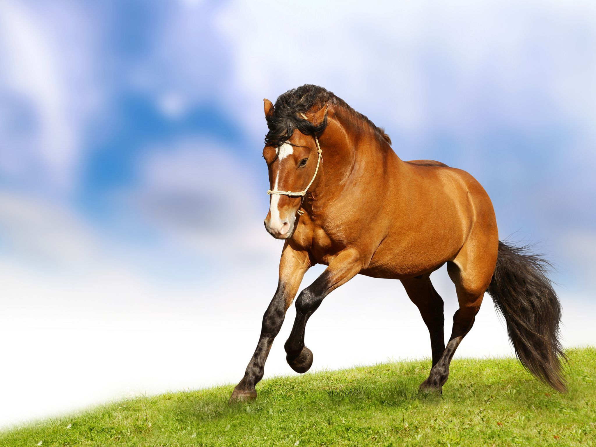 Beautiful Horses Wallpapers Top Free Beautiful Horses Backgrounds Wallpaperaccess