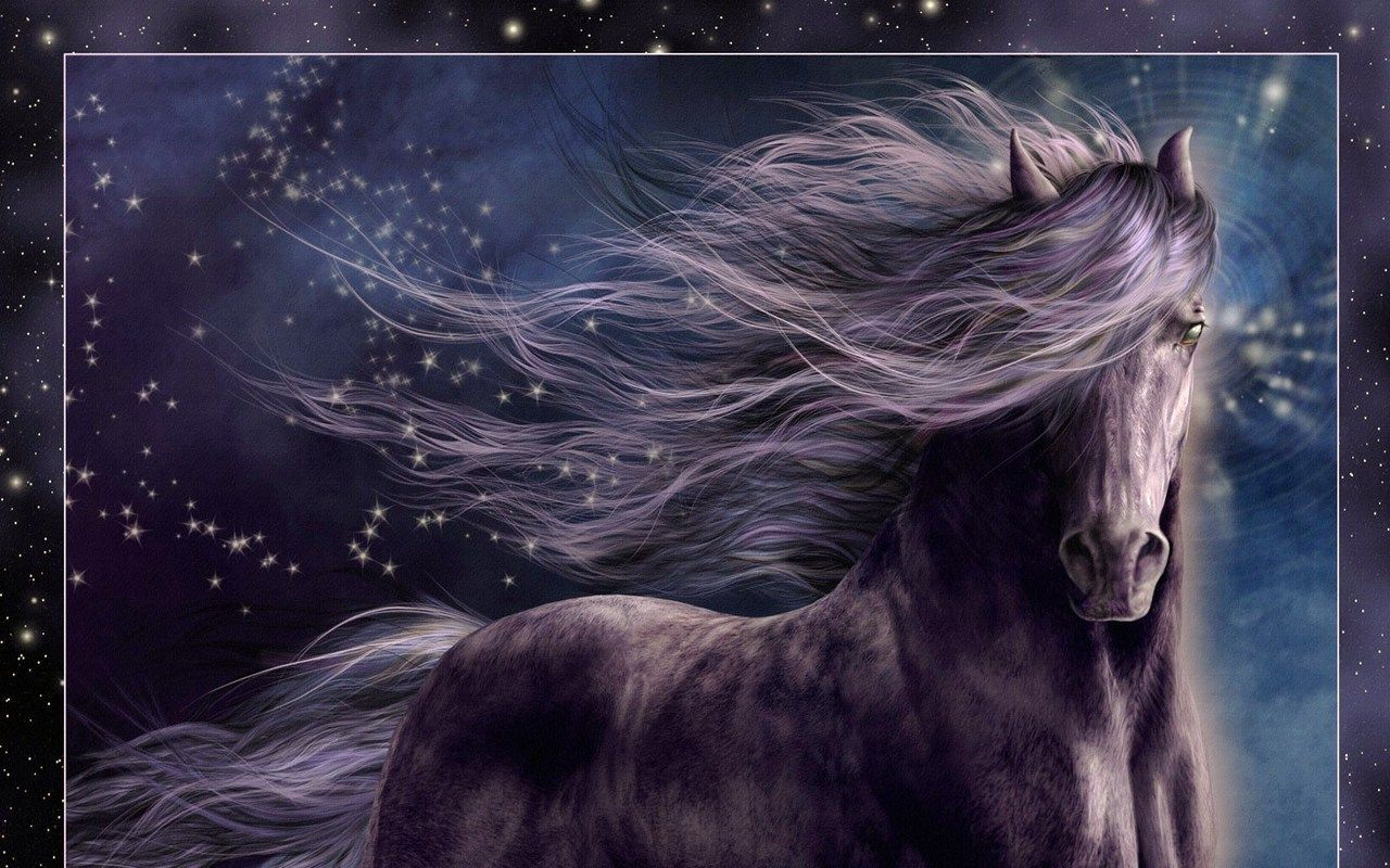 Black Wallpaper Beautiful Horses