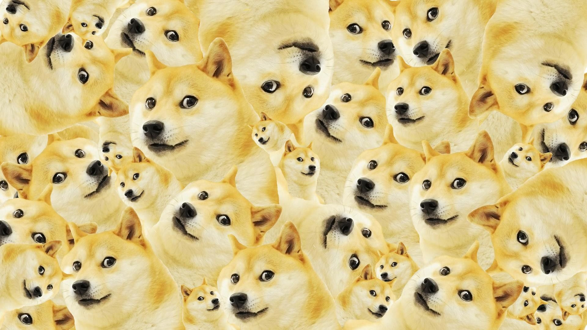 Doge Wallpapers Top Free Doge Backgrounds Wallpaperaccess