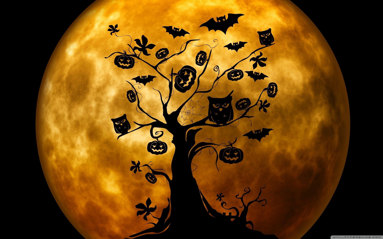 Halloween Owl Wallpapers Top Free Halloween Owl