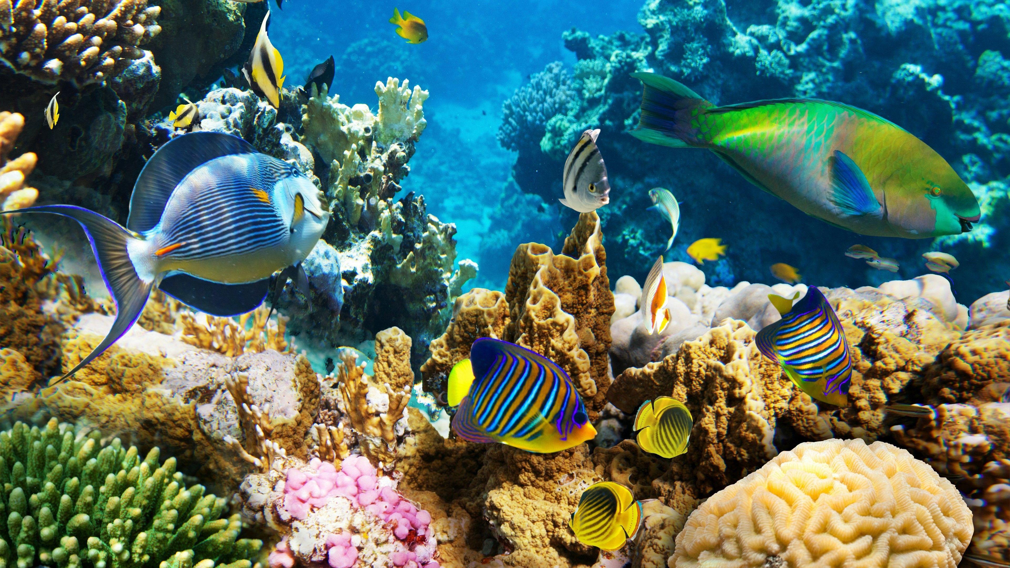 Great Barrier Reef Wallpapers Top Free Great Barrier Reef