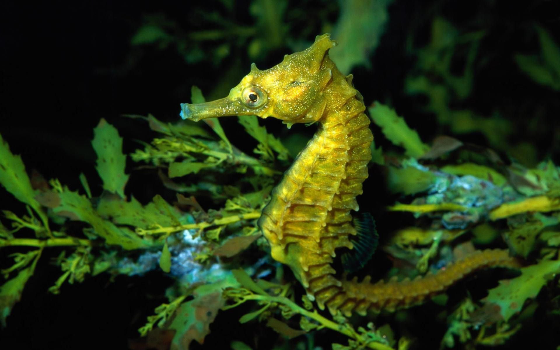 Seahorse Wallpapers Top Free Seahorse Backgrounds Wallpaperaccess