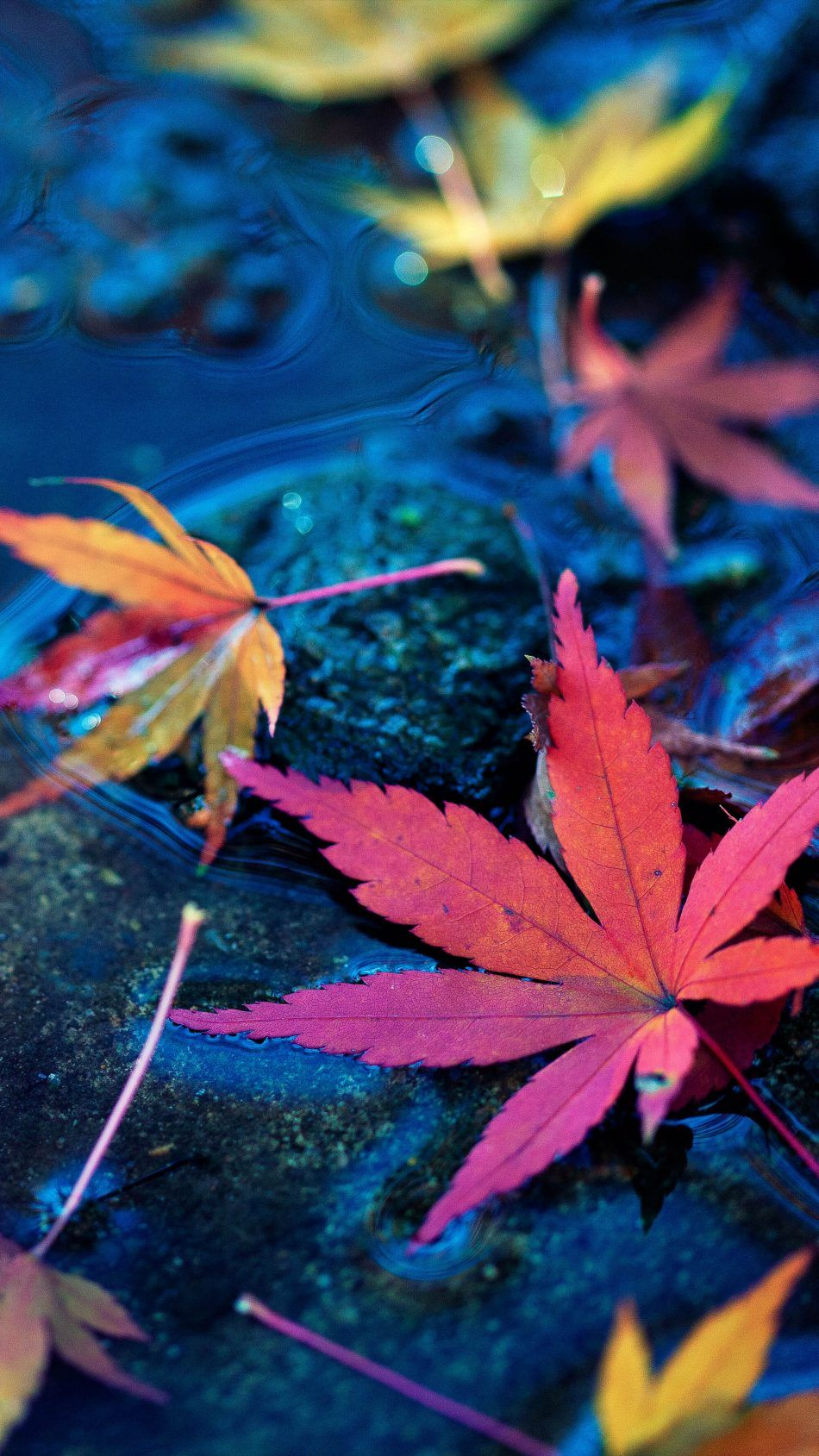 950x1689 Maple Leaves Fall Fall Water Hình nền di động 4k Ultra HD