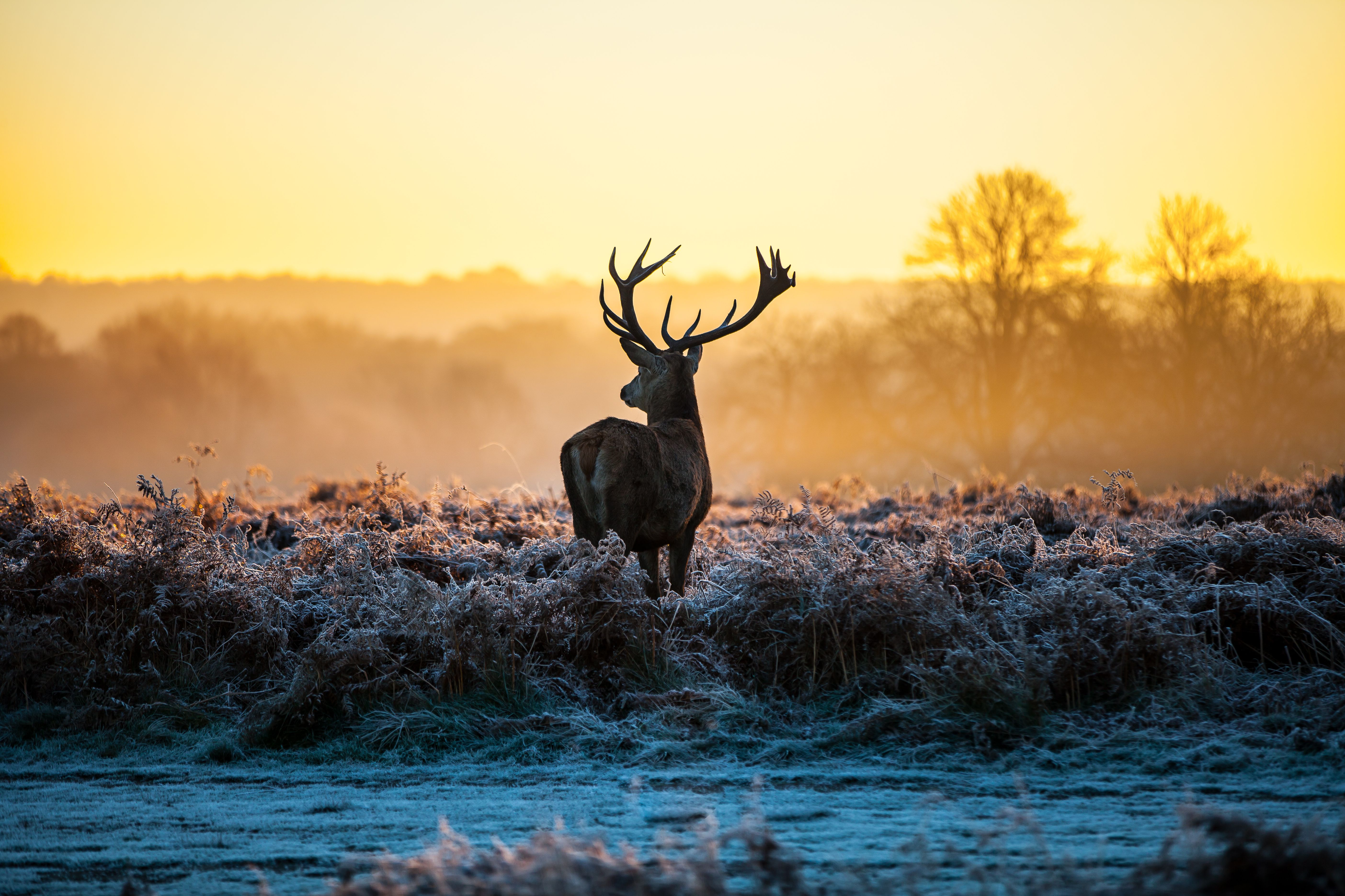 5616x3744 تنزيل جديد Deer Wallpaper HD Resolution VQ