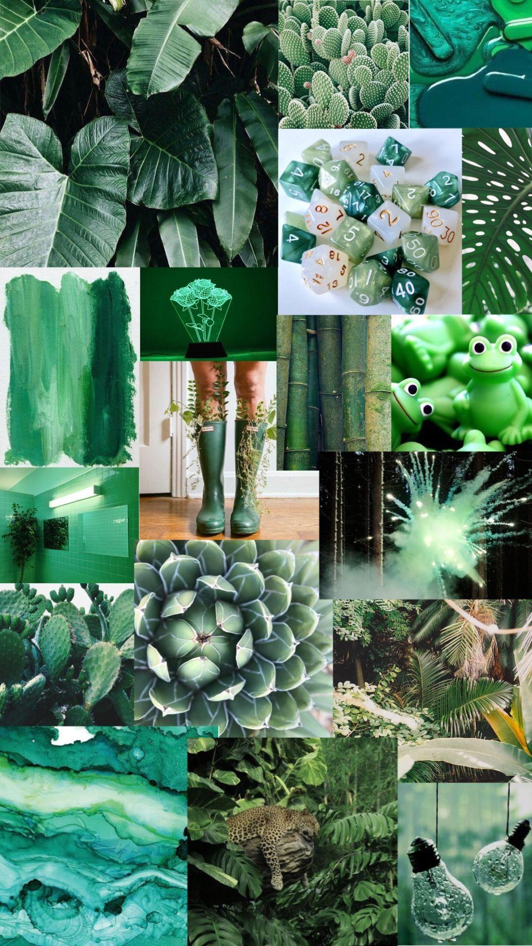 1078x1916 nền thẩm mỹ màu xanh lá cây.  Thẩm mỹ xanh, thẩm mỹ iphone