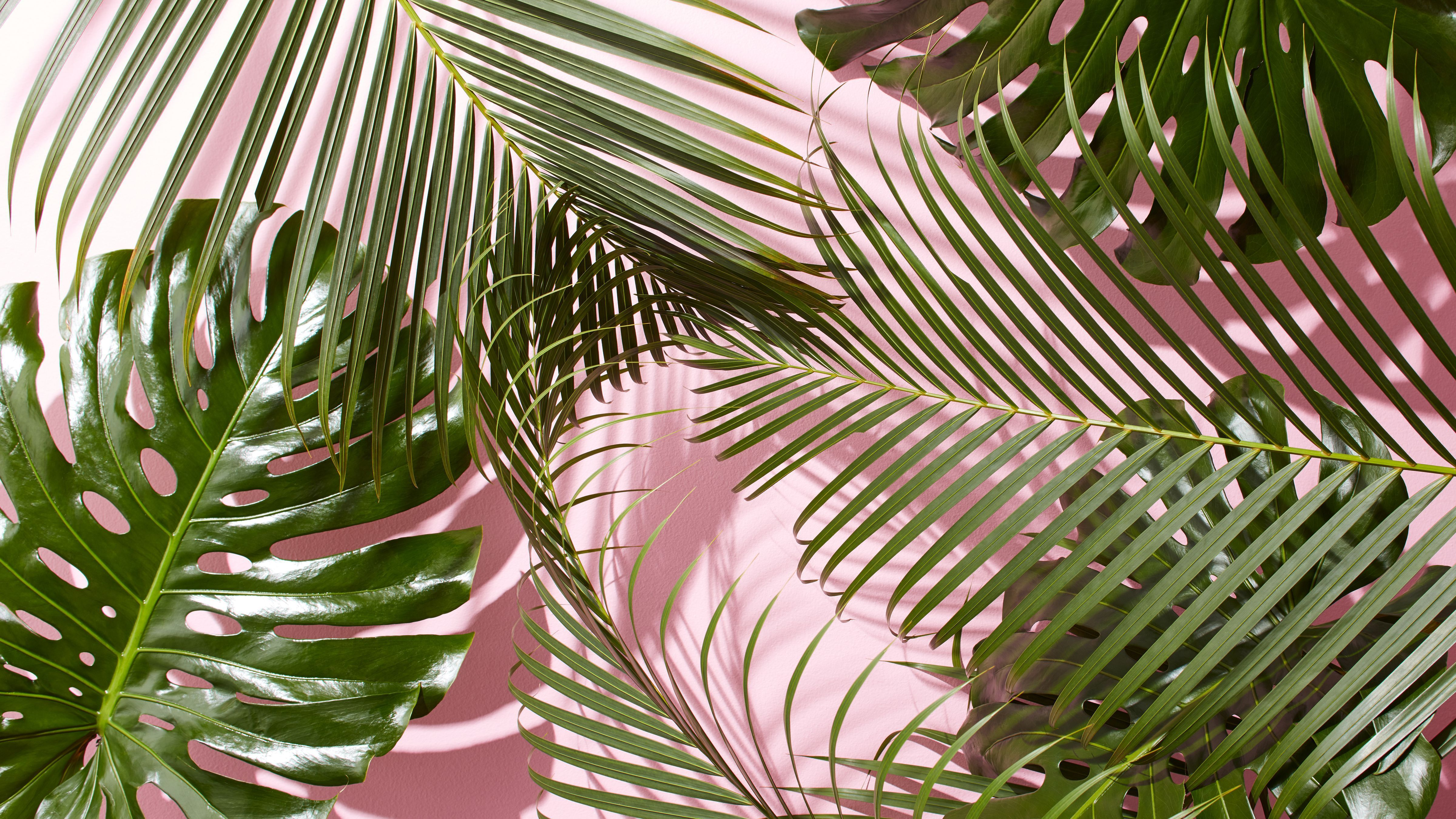 Aesthetic Tropical Leaves Desktop Wallpaper Choose from over a million free vectors, clipart graphics, vector art images, design templates, and illustrations created by artists worldwide! aesthetic tropical leaves desktop wallpaper