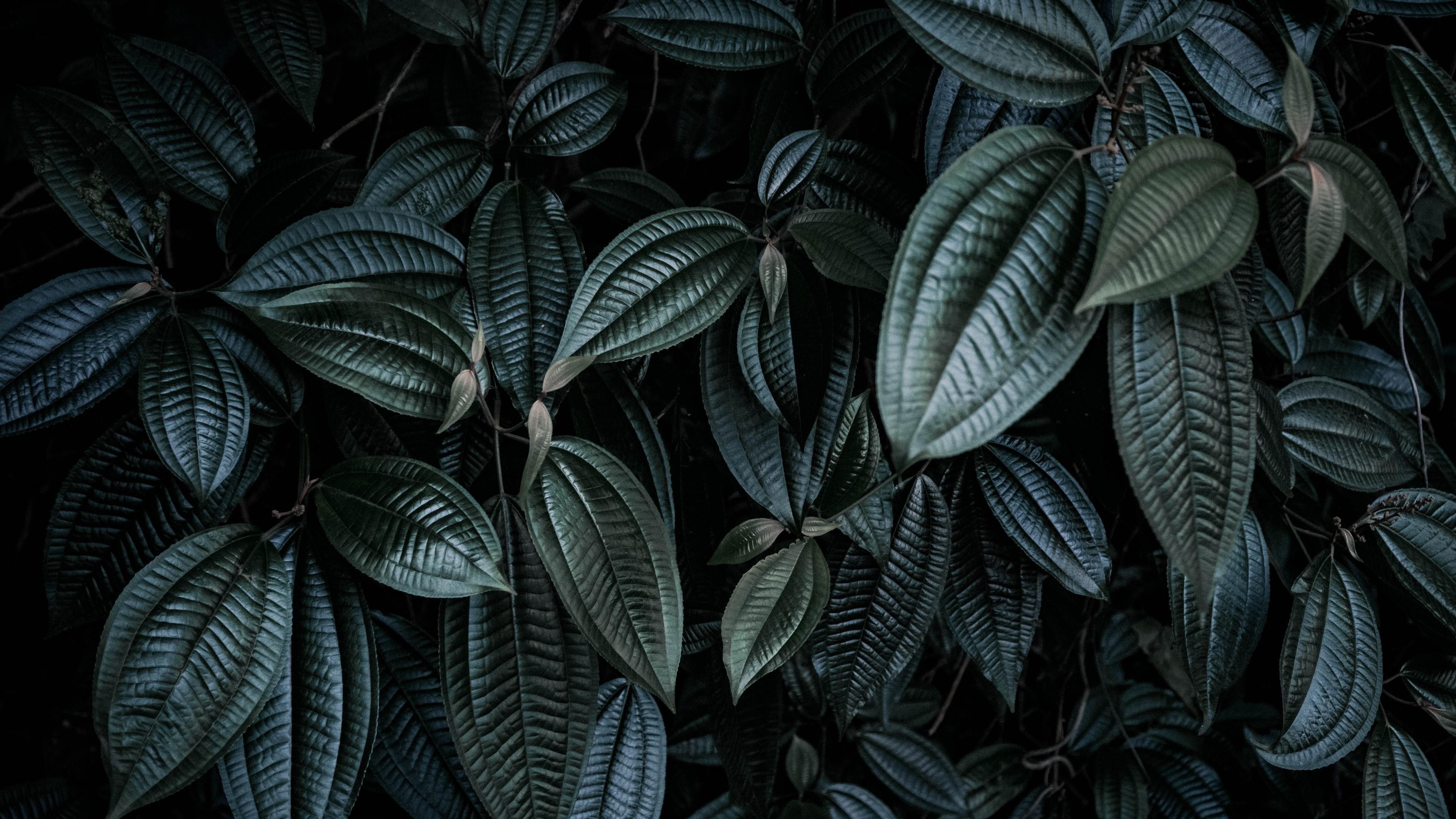 Black Leaf Wallpapers Top Free Black Leaf Backgrounds Wallpaperaccess