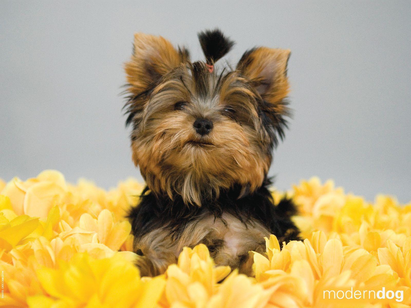 1600x1200 Chó con!  Hình nền con chó hiện đại miễn phí.  Tạp chí Chó hiện đại