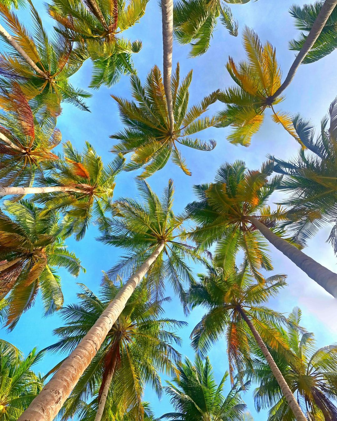 VSCO Palm Tree Wallpapers