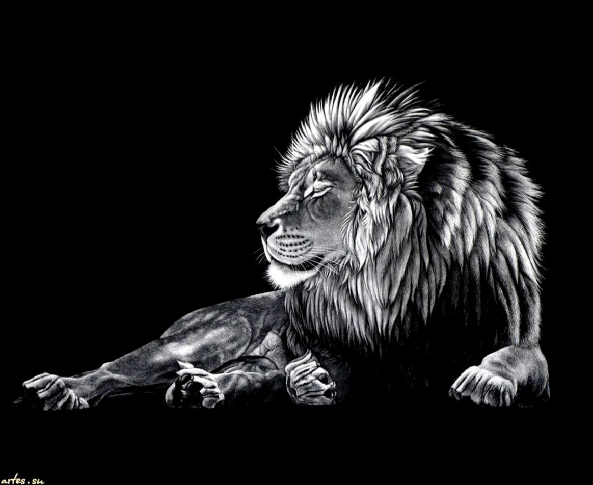 Black Lion Cool Wallpapers Top Free Black Lion Cool Backgrounds Wallpaperaccess