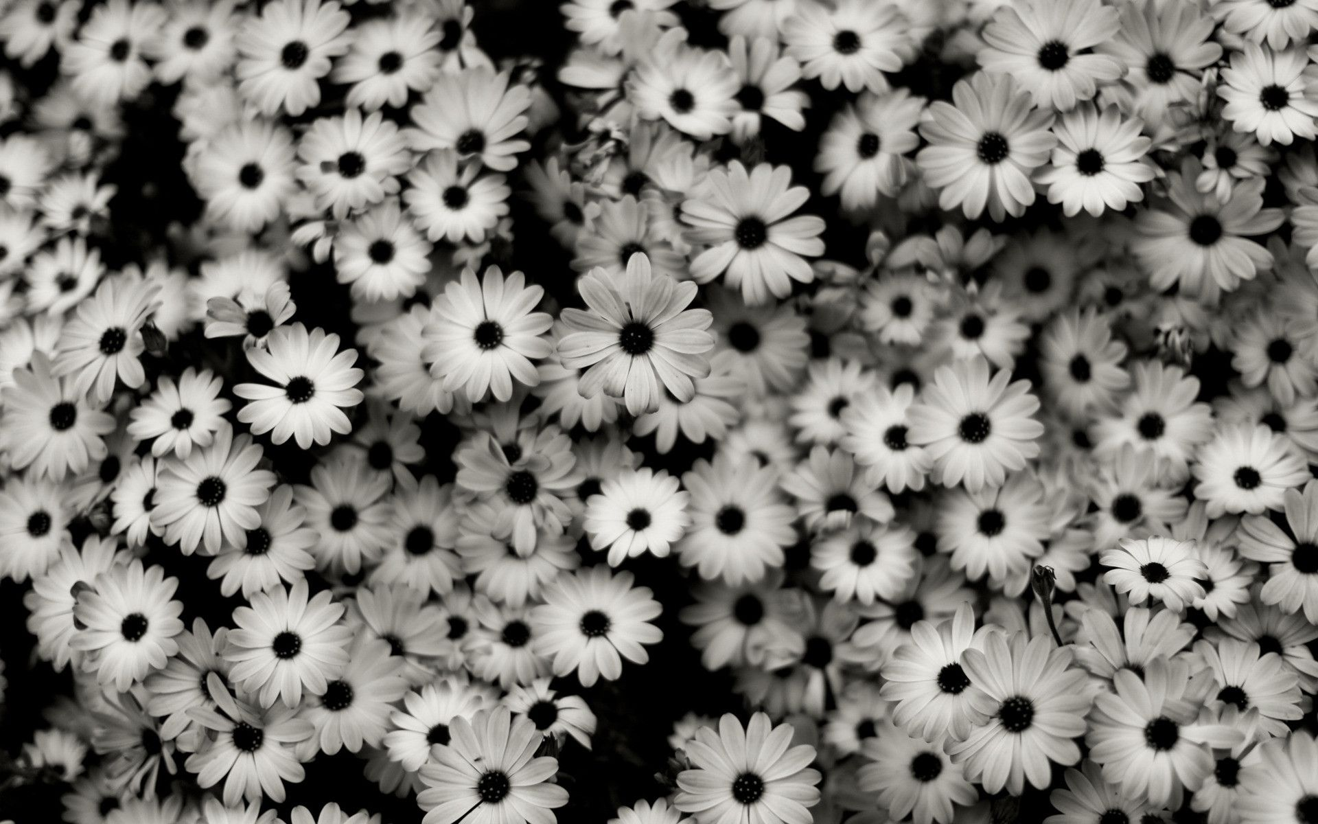 Black And White Aesthetic Flower Wallpapers Top Free Black And White Aesthetic Flower Backgrounds Wallpaperaccess