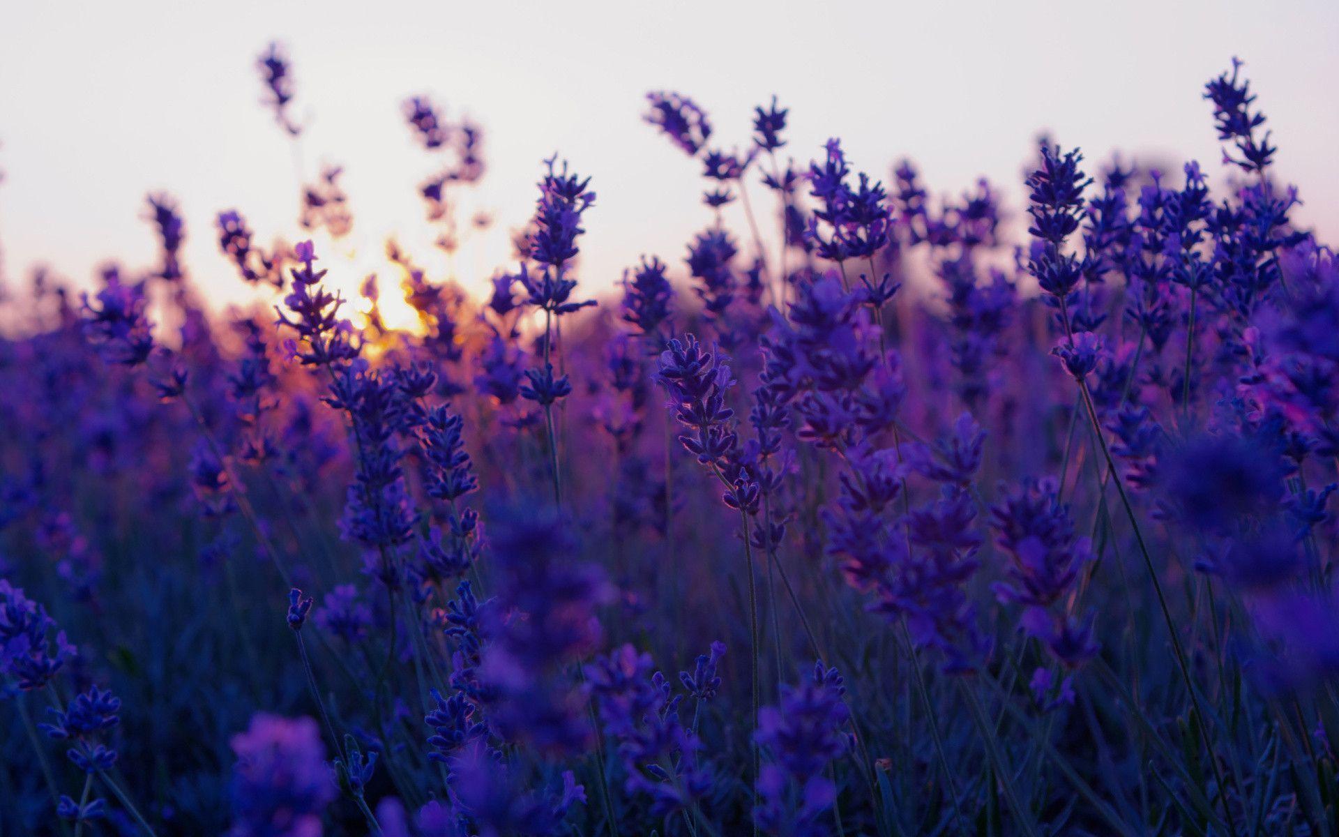 Aesthetic Flower Wallpapers , Top Free Aesthetic Flower