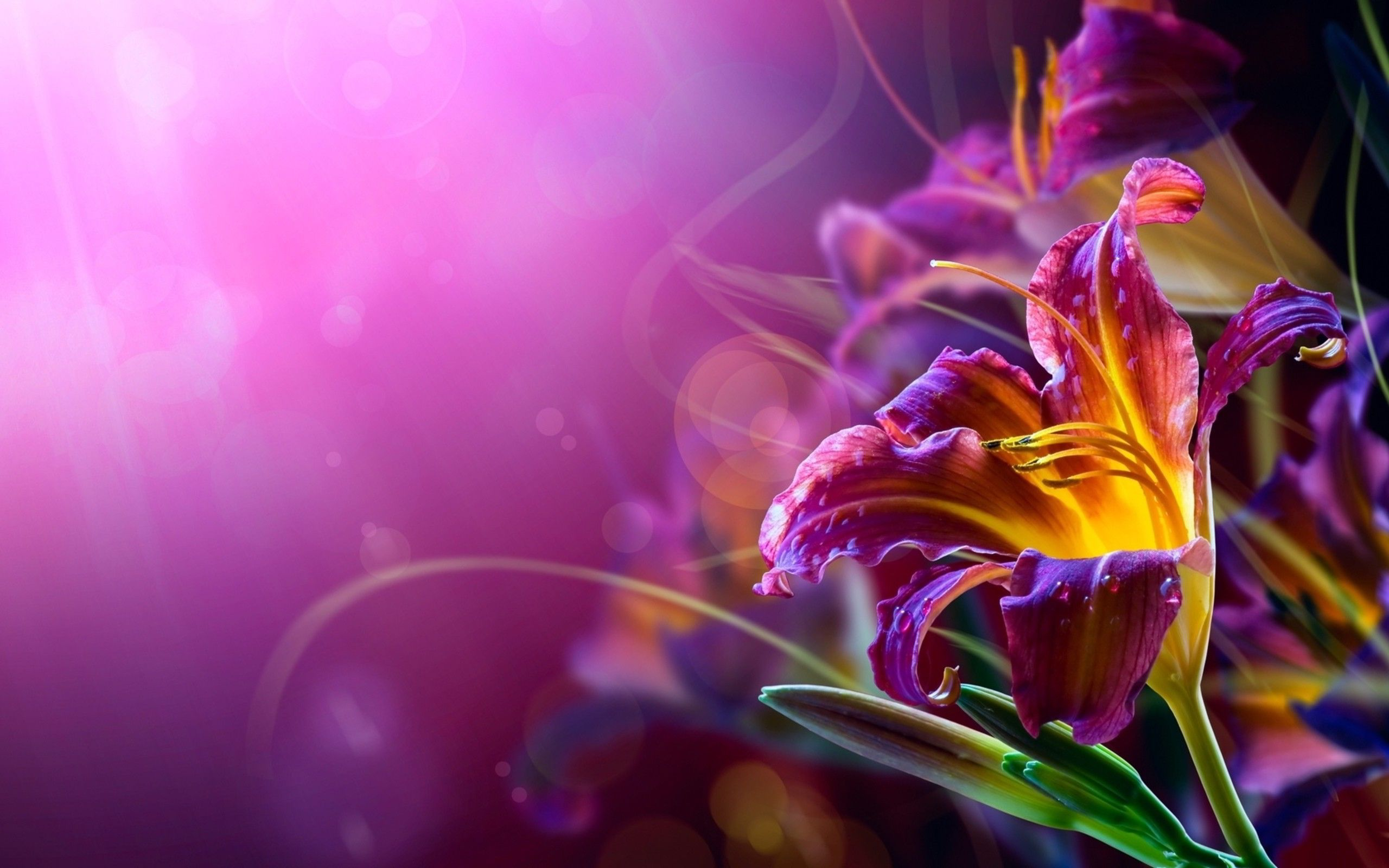 Abstract Floral Desktop Wallpapers Top Free Abstract