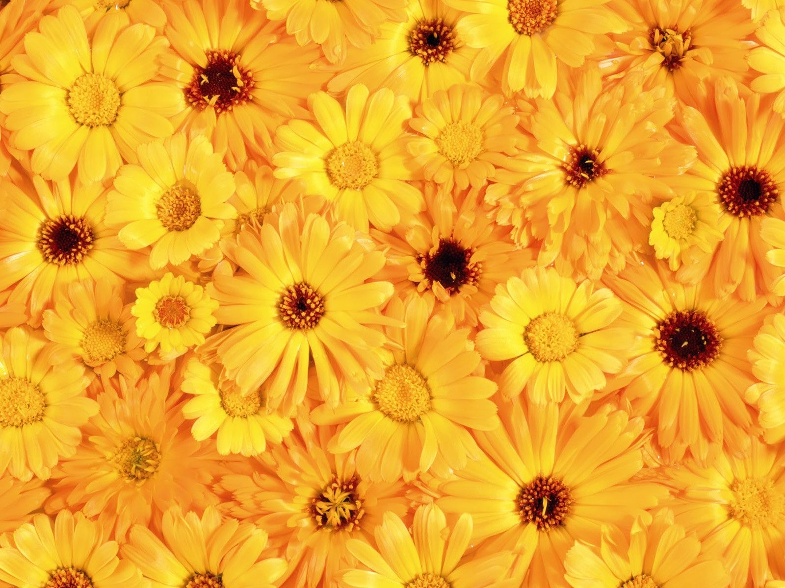 Aesthetic Flower Wallpapers , Top Free Aesthetic Flower
