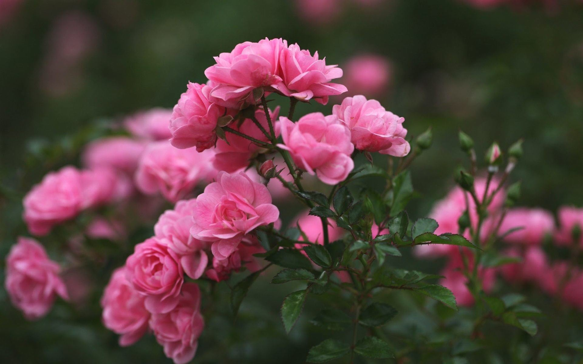 Aesthetic Flower Wallpapers - Top Free Aesthetic Flower ...