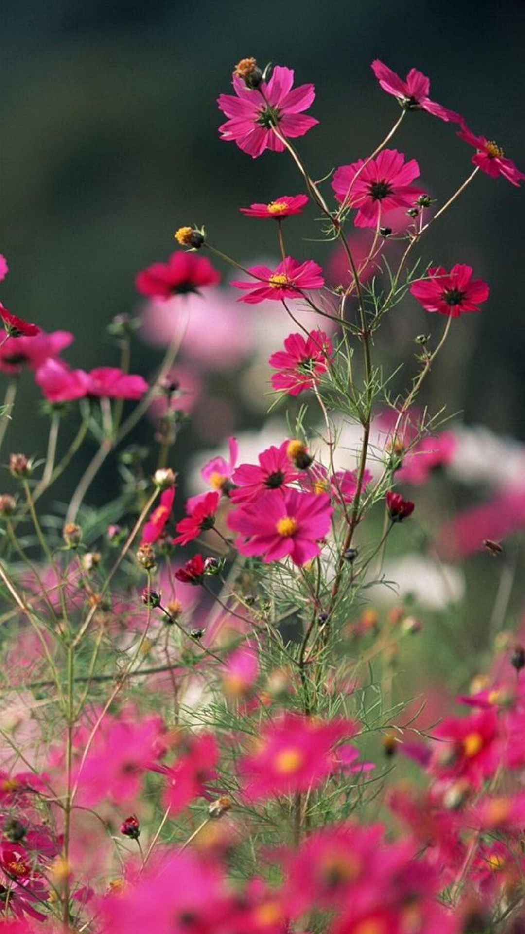 Aesthetic Flower Wallpapers Top Free Aesthetic Flower