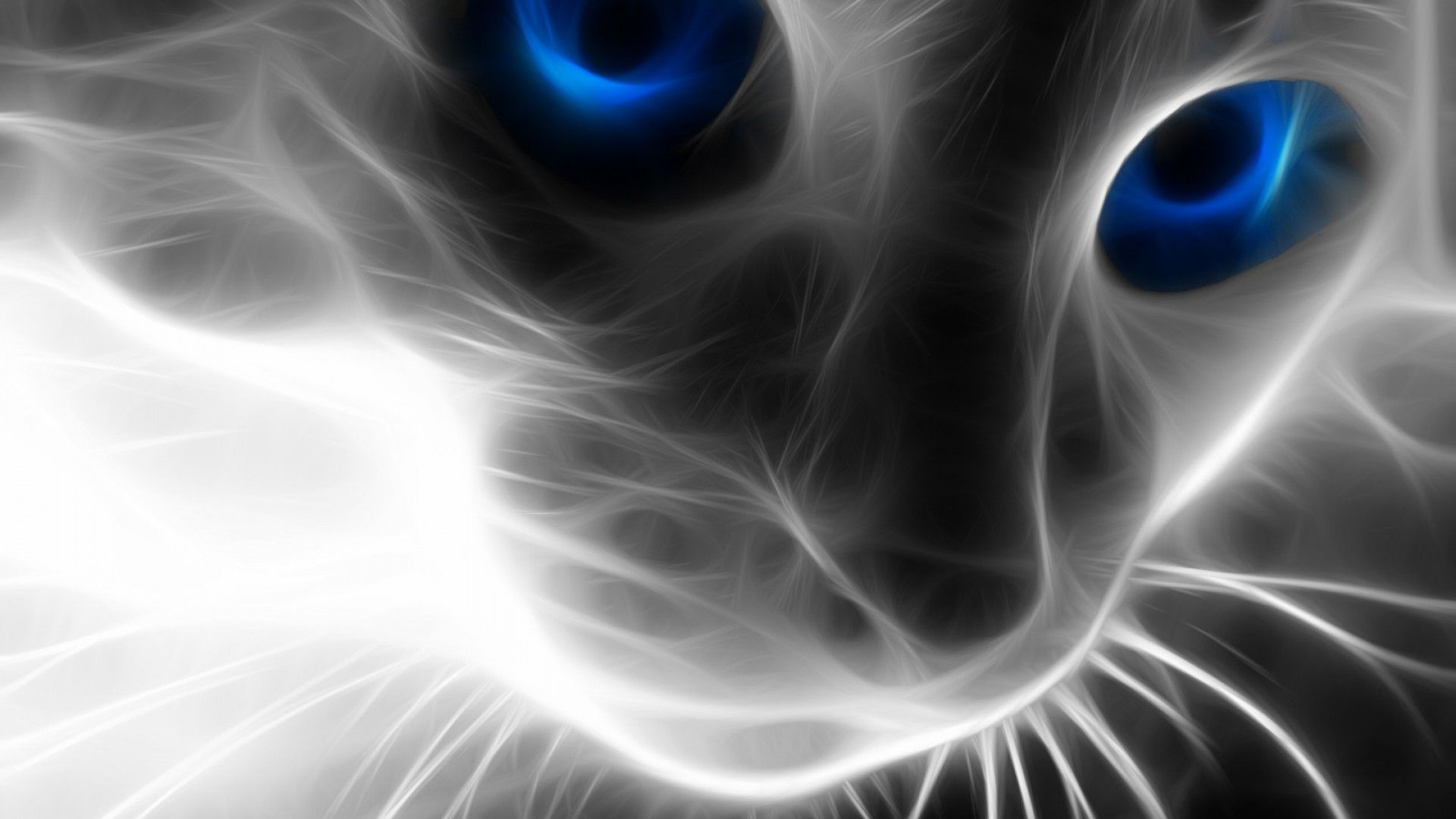 Animal Eyes Abstract Wallpapers Top Free Animal Eyes Abstract Backgrounds Wallpaperaccess