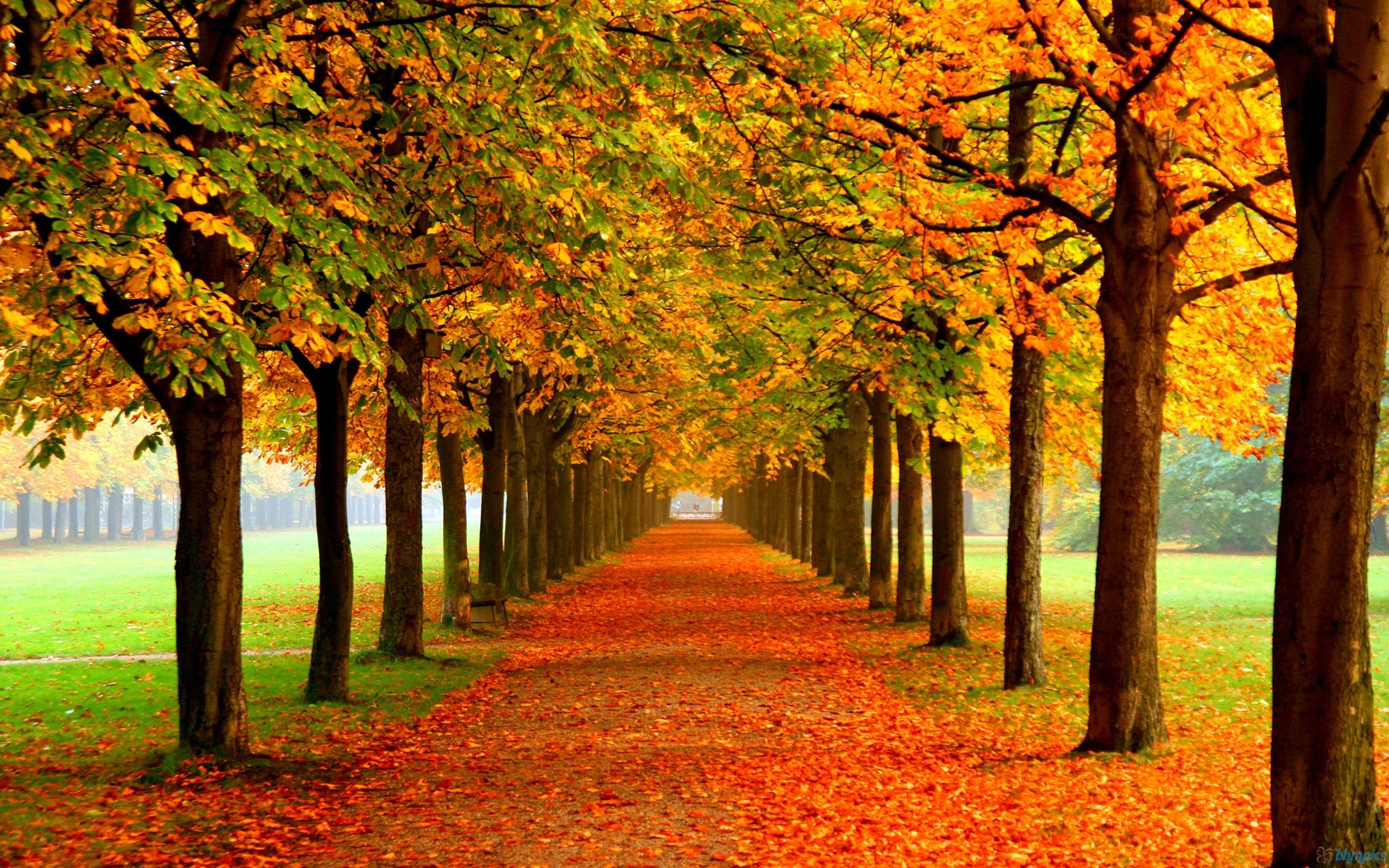 Fall Scenes Wallpapers Top Free Fall Scenes Backgrounds Wallpaperaccess
