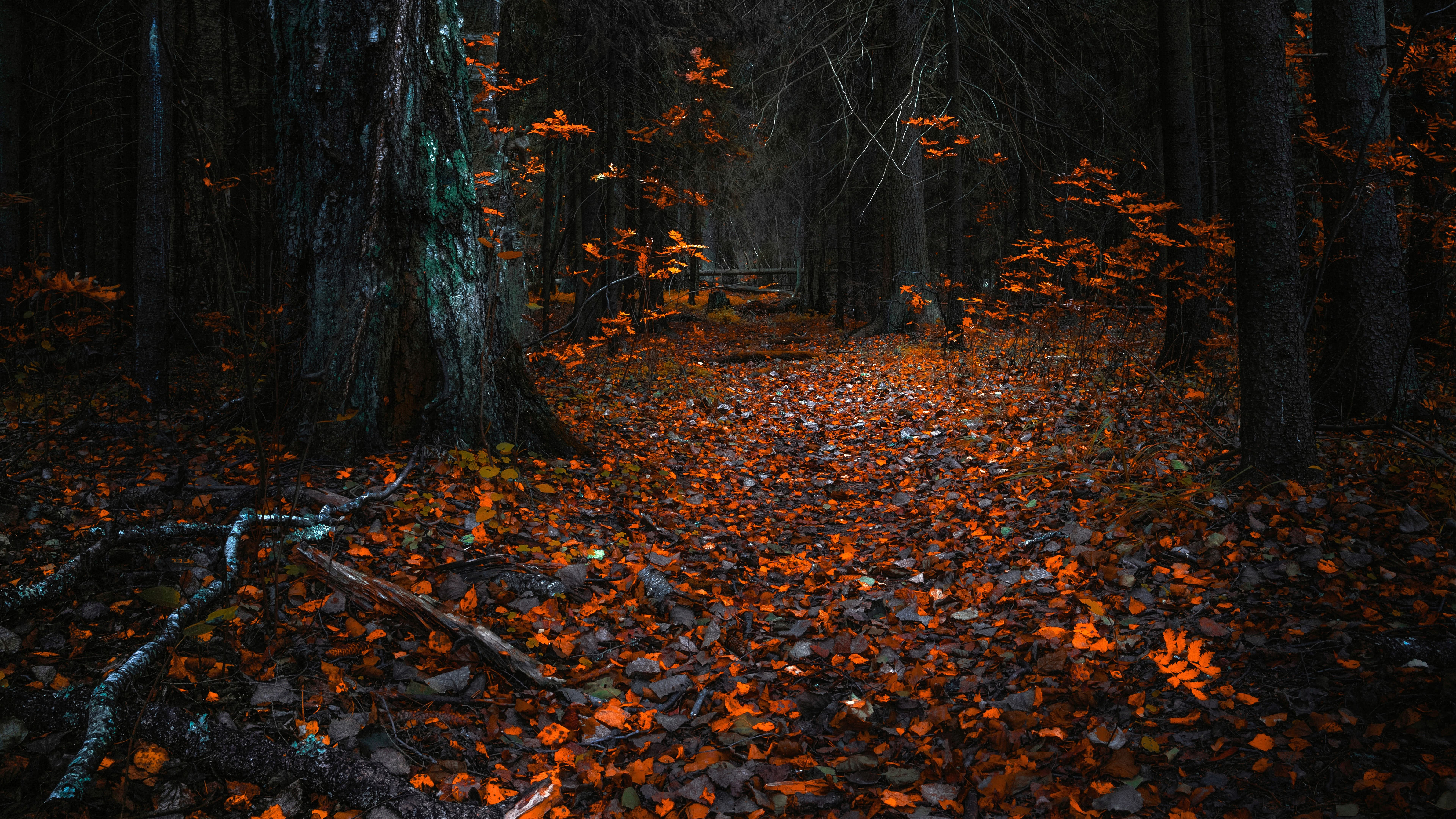 Dark Fall Wallpapers Top Free Dark Fall Backgrounds Wallpaperaccess
