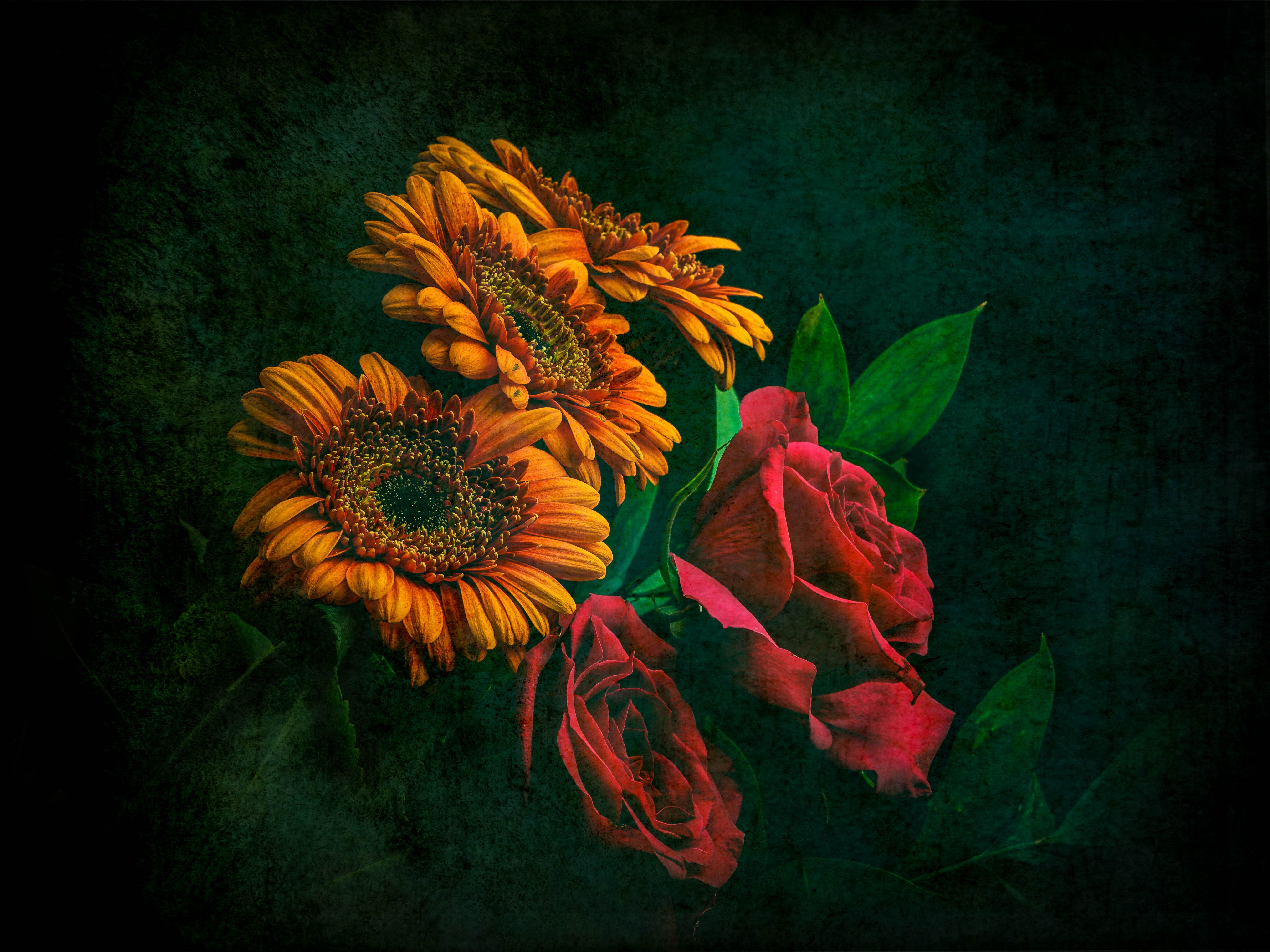 Sunflower And Roses Wallpapers Top Free Sunflower And Roses Backgrounds Wallpaperaccess