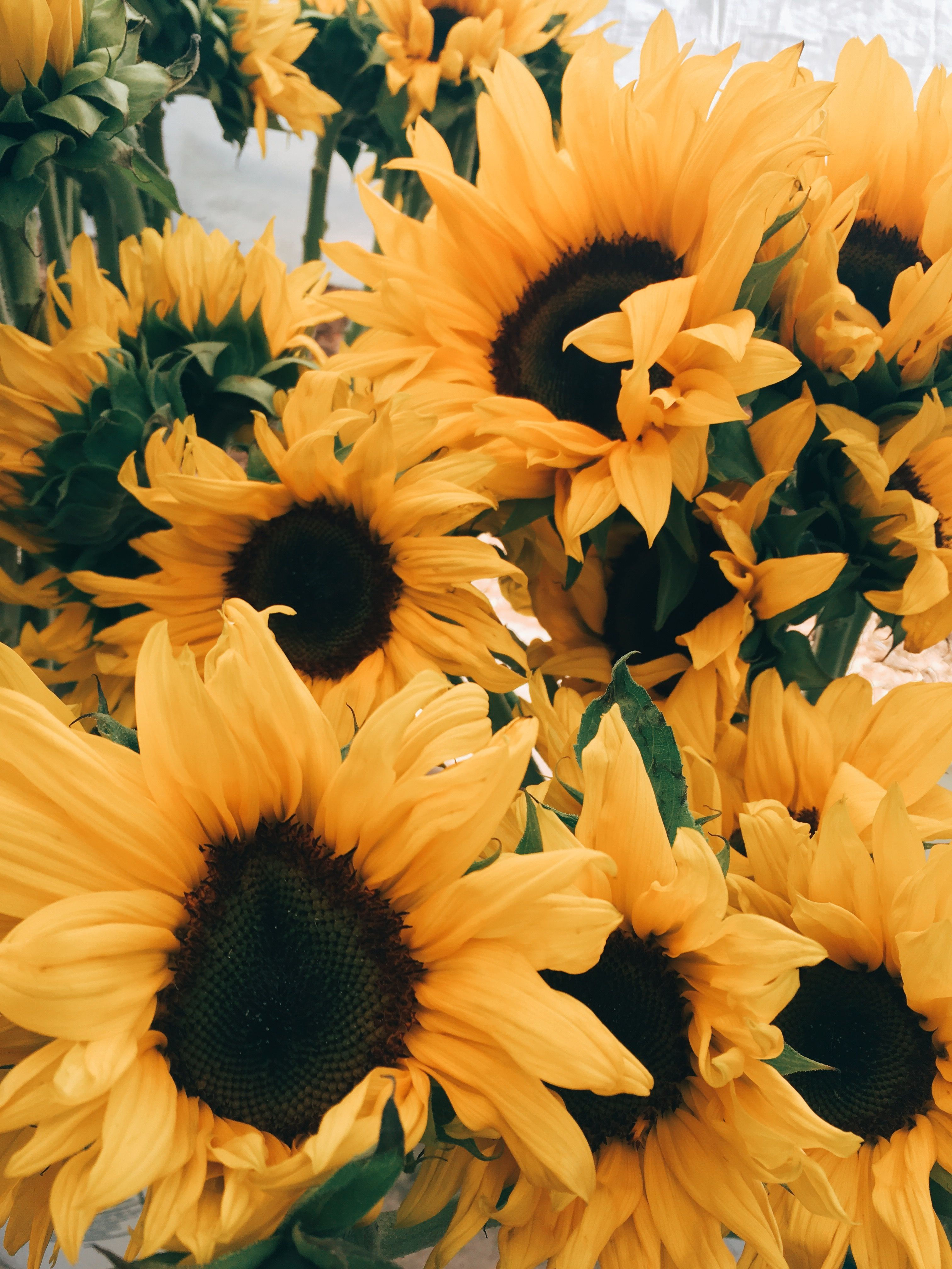 Yellow Aesthetic Sunflowers Wallpapers Top Free Yellow Aesthetic Sunflowers Backgrounds Wallpaperaccess