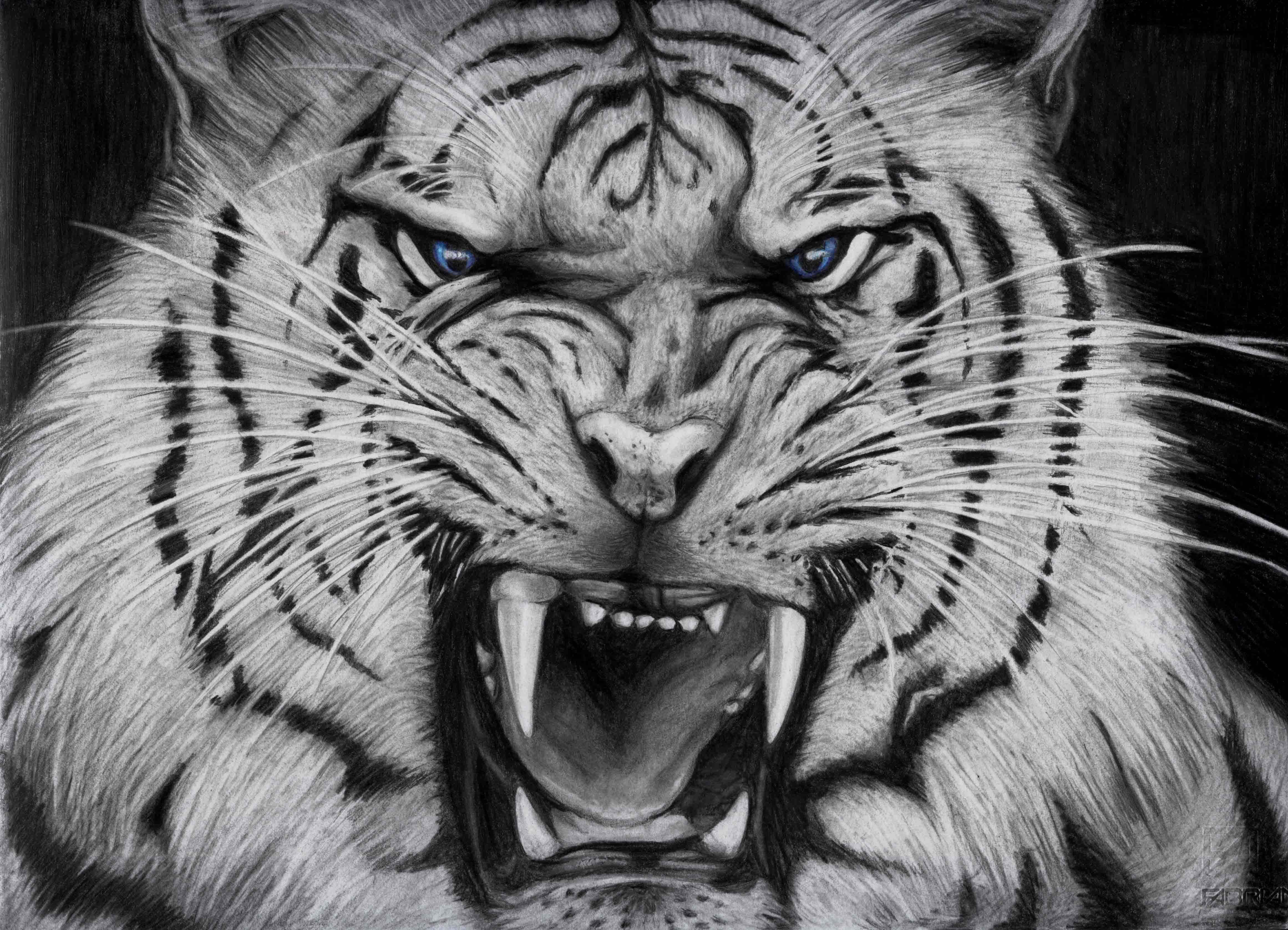Black And White Tiger Wallpapers Top Free Black And White Tiger Backgrounds Wallpaperaccess