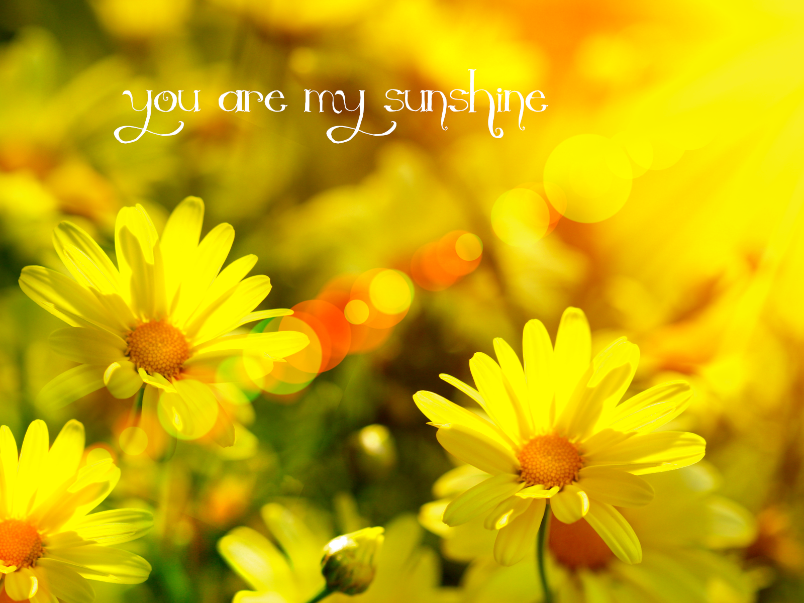 My Sunshine Wallpapers Top Free My Sunshine Backgrounds