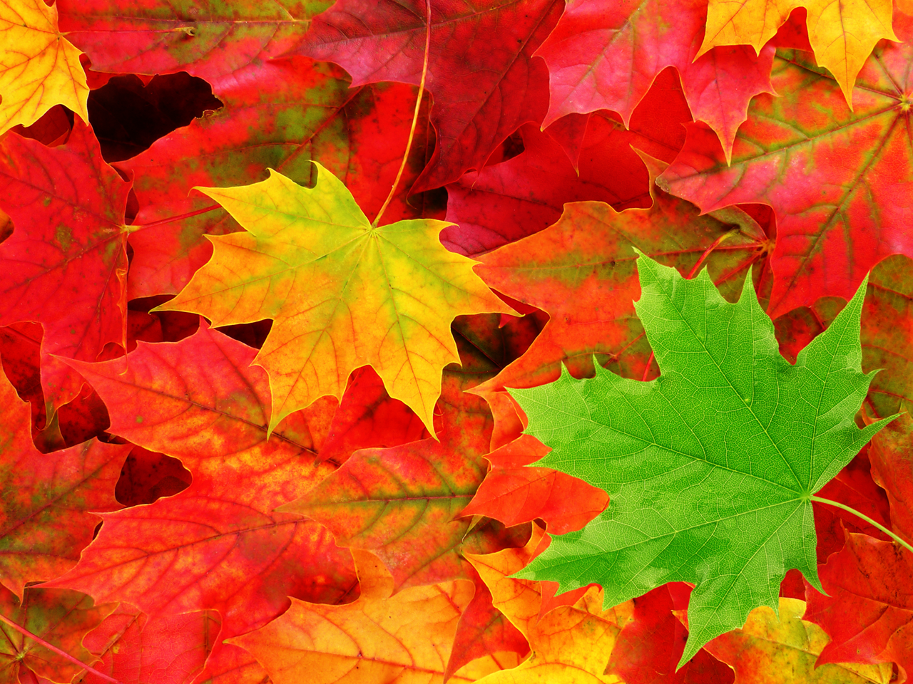 Autumn Leaves Wallpapers Top Free Autumn Leaves