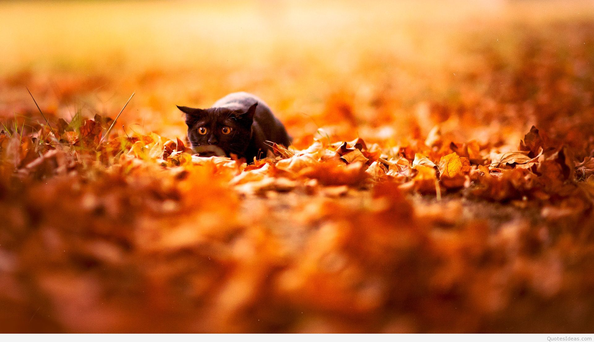 Cute Autumn Wallpapers Top Free Cute Autumn Backgrounds Wallpaperaccess