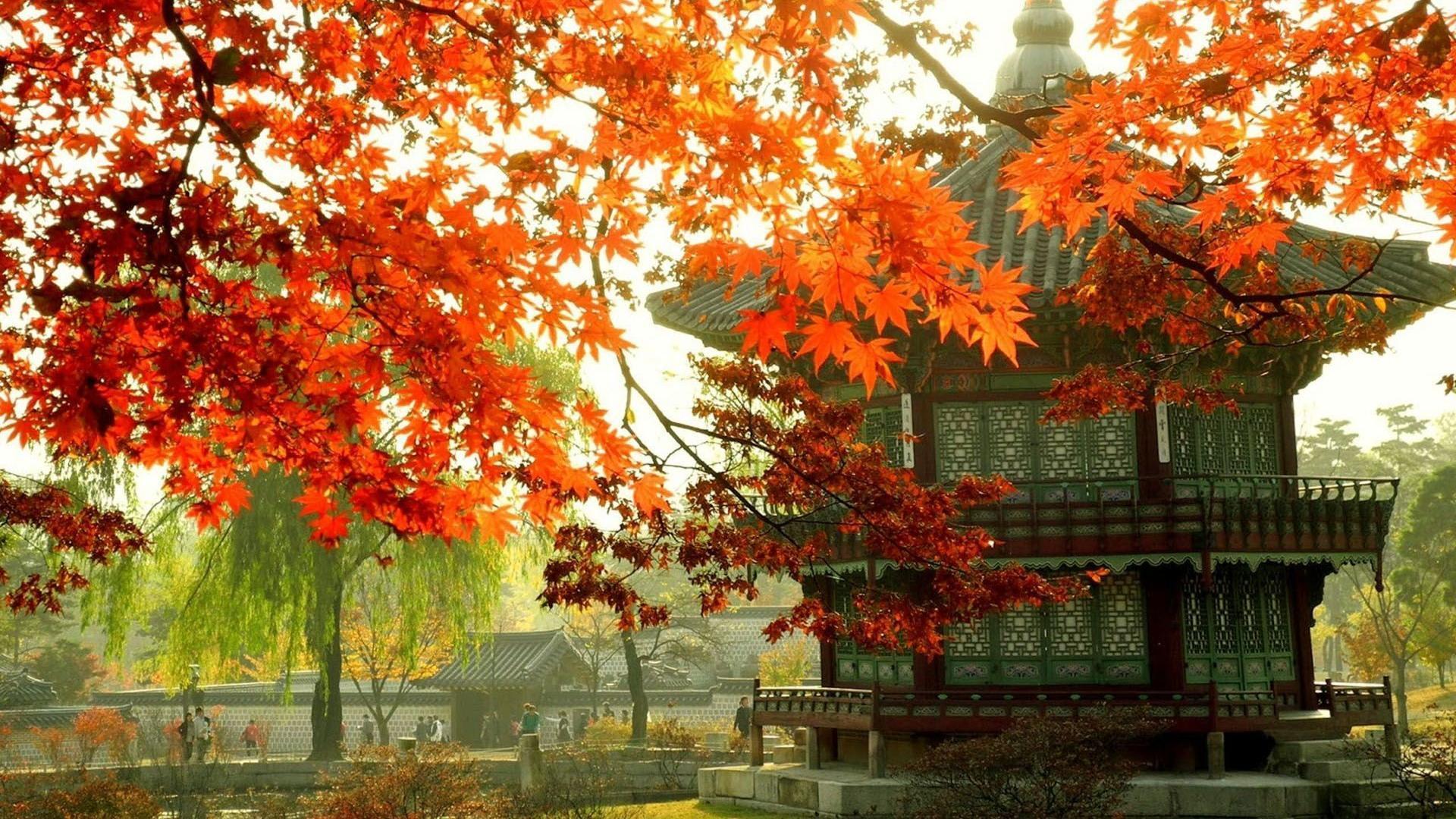 Korea Fall Wallpapers Top Free Korea Fall Backgrounds Wallpaperaccess