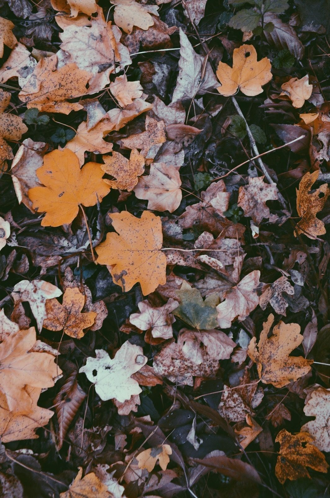 Autumn Aesthetic Wallpapers Top Free Autumn Aesthetic