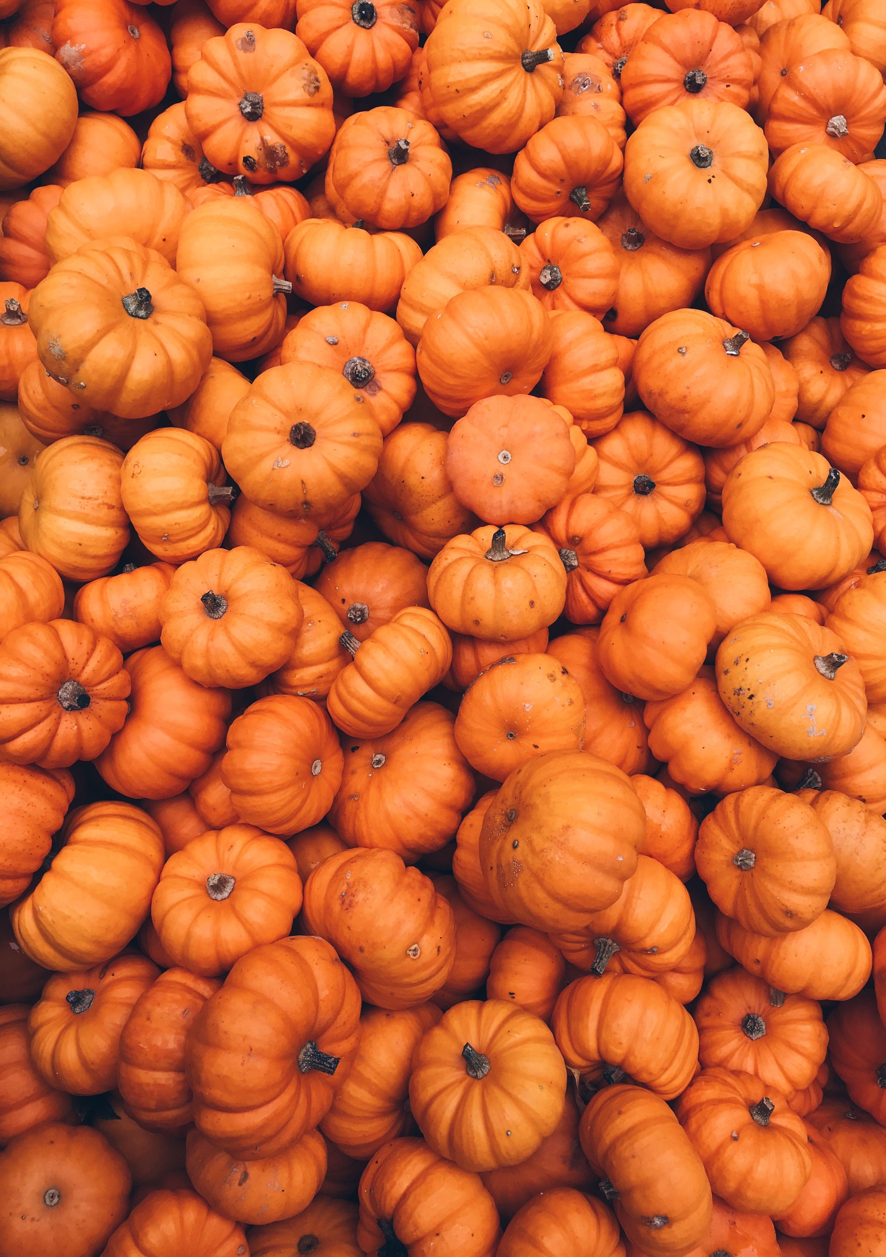 Autumn Aesthetic Wallpapers - Top Free Autumn Aesthetic ...