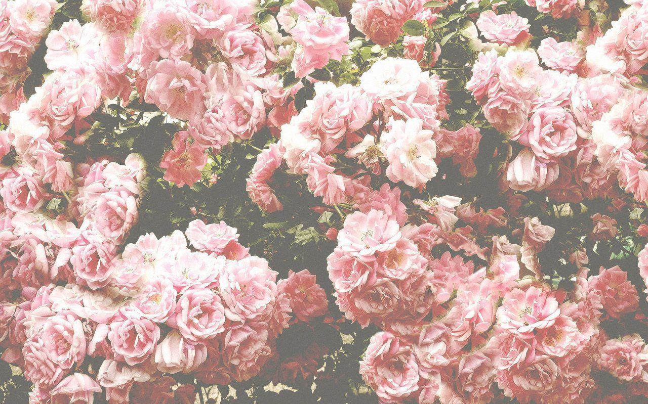 Floral Tumblr Desktop Wallpapers Top Free Floral Tumblr Desktop