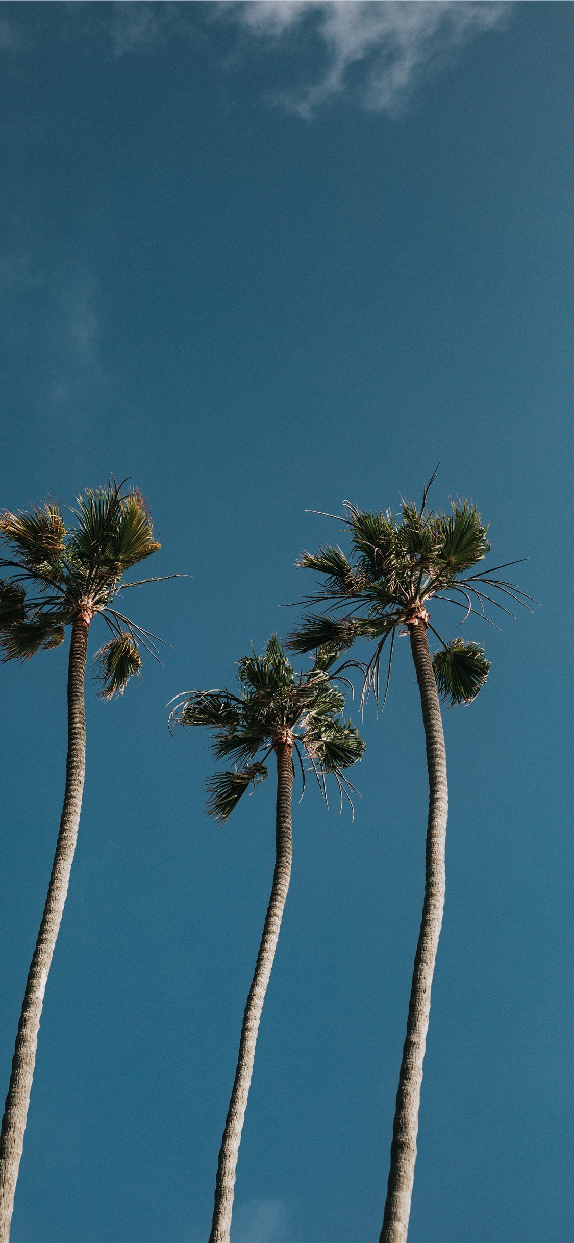 Palm Tree Iphone Wallpapers Top Free Palm Tree Iphone
