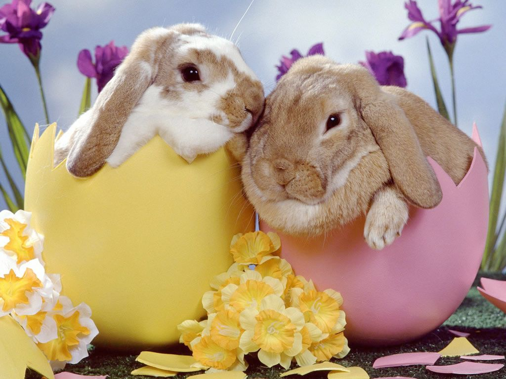 Baby Easter Bunny Wallpapers Top Free Baby Easter Bunny