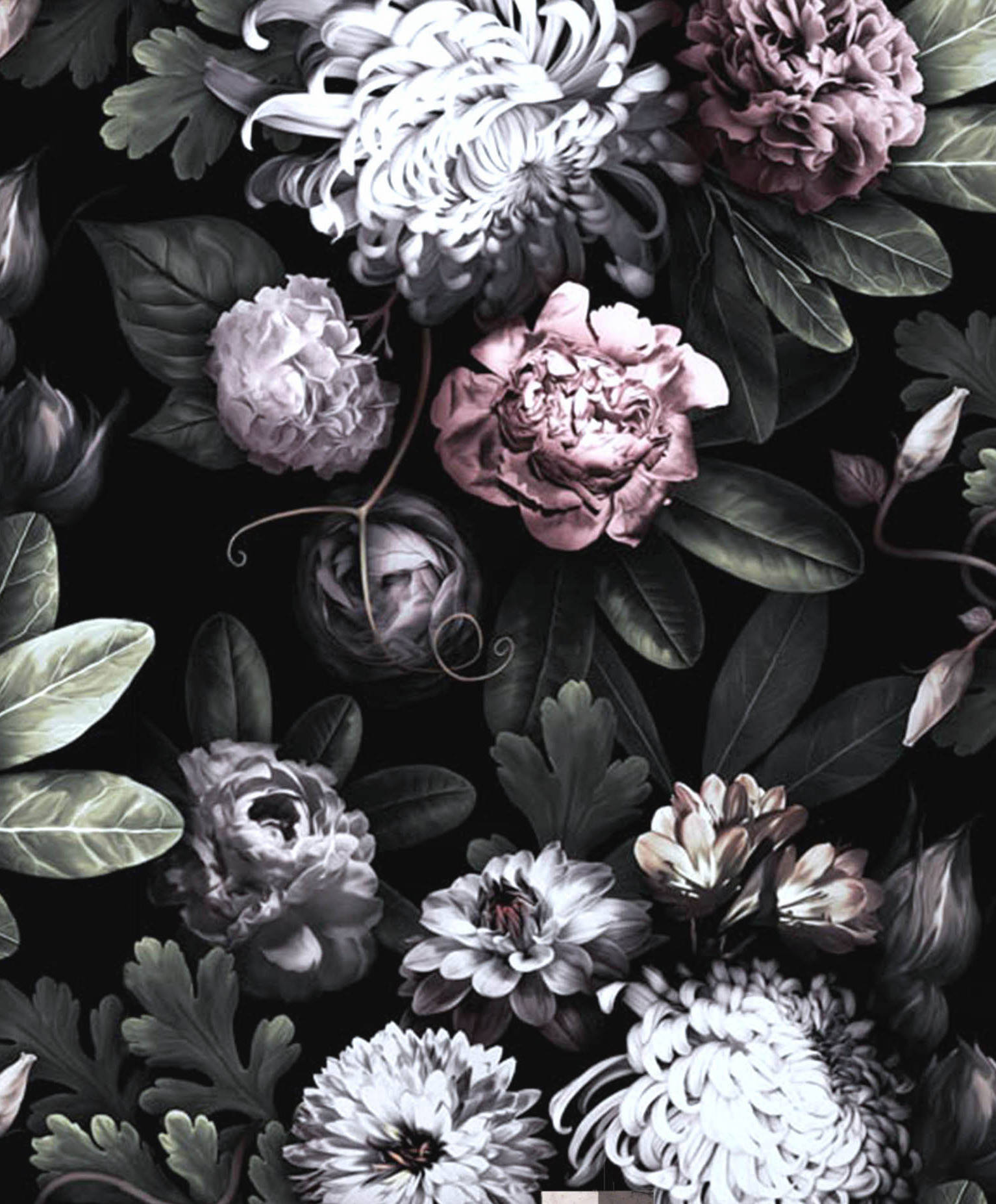 Black Floral Wallpapers Top Free Black Floral Backgrounds